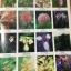 ดอกไม้ และประวัติไม้ดอกเมืองไทย หนังสือชุด ธรรมชาติศึกษา วิชัย อภัยสุวรรณ. ภาพและเรื่อง. ประวิทย์ เจริญพงศ์ บรรณาธิการ thumbnail 16