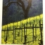 JANCIS ROBINSON'S WINE COURSE. thumbnail 22