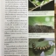 ผีเสื้อ คู่มือดูผีเสื้อในประเทศไทย. ผู้เขียน จารุจินต์ นภีตะภัฎ และ เกรียงไกร สุวรรณภักดิ์ thumbnail 16