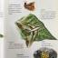 ผีเสื้อ คู่มือดูผีเสื้อในประเทศไทย. ผู้เขียน จารุจินต์ นภีตะภัฎ และ เกรียงไกร สุวรรณภักดิ์ thumbnail 22