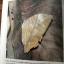 ผีเสื้อ คู่มือดูผีเสื้อในประเทศไทย. ผู้เขียน จารุจินต์ นภีตะภัฎ และ เกรียงไกร สุวรรณภักดิ์ thumbnail 29