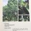 MEDICINAL PLANTS GARDEN IN PHUTTHAMONTHON. รวมรวมต้นไม้ดอก-ไม้ประดับในพุทธมณฑล จัดพิมพ์เนื่องในวโรกาสที่พระบาทสมเด็จพระเจ้าอยู่หัว ภูมิพลอดุลยเดช ครองราชย์ครบ 50 ปี thumbnail 31