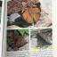ผีเสื้อ คู่มือดูผีเสื้อในประเทศไทย. ผู้เขียน จารุจินต์ นภีตะภัฎ และ เกรียงไกร สุวรรณภักดิ์ thumbnail 30