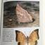 ผีเสื้อ คู่มือดูผีเสื้อในประเทศไทย. ผู้เขียน จารุจินต์ นภีตะภัฎ และ เกรียงไกร สุวรรณภักดิ์ thumbnail 31