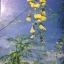 ดอกไม้ และประวัติไม้ดอกเมืองไทย หนังสือชุด ธรรมชาติศึกษา วิชัย อภัยสุวรรณ. ภาพและเรื่อง. ประวิทย์ เจริญพงศ์ บรรณาธิการ thumbnail 2
