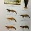 พจนานุกรม ฉบับราชบัณฑิตยสถาน พ.ศ.2554 พิมพ์ครั้งที่ 2 ลิขสิทธิ์ 2556 : ราชบัณฑิตยสถาน thumbnail 35