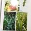 สรรพคุณ พืชสมุนไพร ยาไทยบรรเทาโรค ฟื้นฟูภูมิปัญญาด้วยวิถีชีวิตแบบไทย ผู้เขียน สุธี วรคีรีนิมิต thumbnail 22