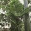 เฟิน ต้นตระกูลไม้ประดับ ฉบับปรับปรุงและเพิ่มเติม thumbnail 22