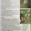 ผีเสื้อ คู่มือดูผีเสื้อในประเทศไทย. ผู้เขียน จารุจินต์ นภีตะภัฎ และ เกรียงไกร สุวรรณภักดิ์ thumbnail 19