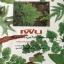 เฟิน ต้นตระกูลไม้ประดับ ฉบับปรับปรุงและเพิ่มเติม thumbnail 2