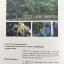 MEDICINAL PLANTS GARDEN IN PHUTTHAMONTHON. รวมรวมต้นไม้ดอก-ไม้ประดับในพุทธมณฑล จัดพิมพ์เนื่องในวโรกาสที่พระบาทสมเด็จพระเจ้าอยู่หัว ภูมิพลอดุลยเดช ครองราชย์ครบ 50 ปี thumbnail 26