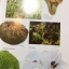 สรรพคุณ พืชสมุนไพร ยาไทยบรรเทาโรค ฟื้นฟูภูมิปัญญาด้วยวิถีชีวิตแบบไทย ผู้เขียน สุธี วรคีรีนิมิต thumbnail 20
