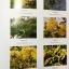 พจนานุกรม ฉบับราชบัณฑิตยสถาน พ.ศ.2554 พิมพ์ครั้งที่ 2 ลิขสิทธิ์ 2556 : ราชบัณฑิตยสถาน thumbnail 33