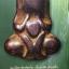 พระปิดตามหาอุด(เมฆพัด)พิมพ์พุงป่อง วัดห้วยจระเข้ นครปฐม หนังสือ SPIRIT Vol.5 No.52. March 2010 thumbnail 11