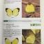 ผีเสื้อ คู่มือดูผีเสื้อในประเทศไทย. ผู้เขียน จารุจินต์ นภีตะภัฎ และ เกรียงไกร สุวรรณภักดิ์ thumbnail 27