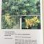 MEDICINAL PLANTS GARDEN IN PHUTTHAMONTHON. รวมรวมต้นไม้ดอก-ไม้ประดับในพุทธมณฑล จัดพิมพ์เนื่องในวโรกาสที่พระบาทสมเด็จพระเจ้าอยู่หัว ภูมิพลอดุลยเดช ครองราชย์ครบ 50 ปี thumbnail 45