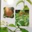 สรรพคุณ พืชสมุนไพร ยาไทยบรรเทาโรค ฟื้นฟูภูมิปัญญาด้วยวิถีชีวิตแบบไทย ผู้เขียน สุธี วรคีรีนิมิต thumbnail 19