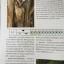 นกแหลมผักเบี้ย. Birds of LAEM PHAK BIA. ผู้เขียน Philip D.Round และ วิเชียร คงทอง thumbnail 24