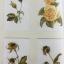 ขอเพียงแต่เห็น เรื่องและภาพวาด ที่แสดงให้เห็นธรรมชาติที่ต้องการอนุรักษ์พันธุ์ไม้ในเอเซียโดยเฉพาะกล้วยไม้ที่หายากและใกล้สูญพันธุ์ ผู้เขียน ลลิตา โรจนกร สถาบันเอเซียศึกษา จุฬาลงกรณ์มหาวิทยาลัย thumbnail 20