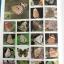 ผีเสื้อ คู่มือดูผีเสื้อในประเทศไทย. ผู้เขียน จารุจินต์ นภีตะภัฎ และ เกรียงไกร สุวรรณภักดิ์ thumbnail 9