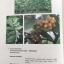 MEDICINAL PLANTS GARDEN IN PHUTTHAMONTHON. รวมรวมต้นไม้ดอก-ไม้ประดับในพุทธมณฑล จัดพิมพ์เนื่องในวโรกาสที่พระบาทสมเด็จพระเจ้าอยู่หัว ภูมิพลอดุลยเดช ครองราชย์ครบ 50 ปี thumbnail 32