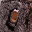 เคสซัมซุง a8 2018 เคสนิ่มขนกระต่ายฟูน่ารักมุ้งมิ้ง thumbnail 5