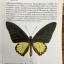 ผีเสื้อ คู่มือดูผีเสื้อในประเทศไทย. ผู้เขียน จารุจินต์ นภีตะภัฎ และ เกรียงไกร สุวรรณภักดิ์ thumbnail 23