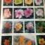 ดอกไม้ และประวัติไม้ดอกเมืองไทย หนังสือชุด ธรรมชาติศึกษา วิชัย อภัยสุวรรณ. ภาพและเรื่อง. ประวิทย์ เจริญพงศ์ บรรณาธิการ thumbnail 14