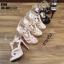 รองเท้าส้นสูงสีดำ งานสไตล์ YSL หนังแก้ว LB-K766-BLK thumbnail 5