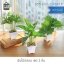 ต้นไม้ปลอม ต้นไม้แต่งบ้าน ดอกไม้พลาสติก ต้นไม้พลาสติก ดอกไม้ประดิษฐ์ (เซ็ต 3 ชิ้น) ขนาด 8.5x8.5x29 CM. รุ่น B55-FG3-22X8X7.5 thumbnail 1