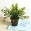 ต้นไม้ปลอม ต้นไม้แต่งบ้าน ดอกไม้พลาสติก ต้นไม้พลาสติก ดอกไม้ประดิษฐ์ (เซ็ต 3 ชิ้น) ขนาด 10x8x16 CM. thumbnail 3