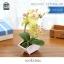 ต้นไม้ปลอม ต้นไม้แต่งบ้าน ดอกไม้พลาสติก ต้นไม้พลาสติก ดอกไม้ประดิษฐ์ (ต้นกล้วยไม้) ขนาด 14x6x22 CM. thumbnail 2