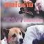 คนใจร้าย หมาก็ยังรัก thumbnail 1