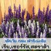 ซัลเวีย กลุ่ม ฟาริเนเซีย (Coccenea Farinecea Series) 0.81-1.32 บาท/เมล็ด