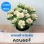 ไม้ตัดดอก กะหล่ำประดับ คอนดอร์ เพียวไวท์ (Conder Purewhite) 1.39-1.9 บาท/เมล็ด