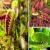เมล็ดพันธุ์ พืชกินแมลง