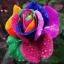 กุหลาบ ดอกสีรุ้ง แพ็ค 10 เม็ด