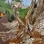 หงษ์ทองคู่เซมิคเคลือบทองแสนสง่า ขนาด 16.5*26.5*27 cm. thumbnail 2