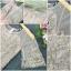 พร้อมส่ง ผ้าตาข่ายช่วงกระโปรงผ้าชีฟอง thumbnail 8