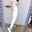 เสื้อผ้าเกาหลี พร้อมส่ง เสื้อ+กางเกงขายาวเข้ารูป thumbnail 4