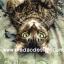 กระดาษสาพิมพ์ลาย สำหรับทำงาน เดคูพาจ Decoupage แนวภาพ แมวน้อยผู้มีคติว่า จงมองมุมกลับ แล้วคุณจะได้วิสัยทัศน์ใหม่ๆ อิอิ thumbnail 1