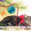 กระดาษสาพิมพ์ลาย สำหรับทำงาน เดคูพาจ Decoupage แนวภาำพ ลูกแมวน้อย ตัวดำ หัวเทา นอนเ่ล่นสร้อยลูกปัดประดับต้นคริสต์มาส thumbnail 1
