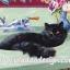กระดาษสาพิมพ์ลาย สำหรับทำงาน เดคูพาจ Decoupage แนวภาำพ เจ้าแมวน้อยตัวดำนอนสบายๆอยู่บนอ่างล้างหน้าหินอ่อนสีเชียว thumbnail 1