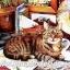 กระดาษสาพิมพ์ลาย สำหรับทำงาน เดคูพาจ Decoupage แนวภาำพ น้องแมวสีสวย นอนคอยบทสรุปของเจ้านายนักเดินทางว่าจะพาไปเที่ยวไหน thumbnail 1