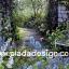 กระดาษสาพิมพ์ลาย สำหรับทำงาน เดคูพาจ Decoupage แนวภาำพ บ้านและสวน มองทะลุซุ้มหินโค้ง เป็นทางเดินลงเขาแบบป่าต้นไม้ (ปลาดาวดีไซน์) thumbnail 1