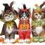 กระดาษสาพิมพ์ลาย สำหรับทำงานฝืมือ เดคูพาจ Decoupage กระดาษสา แนวภาพ น้องแมวแต่งแฟนซีถือฟักทองมาร่วมงาน Halloween ปลาดาวดีไซน์ thumbnail 1