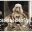 กระดาษสาพิมพ์ลาย rice paper เป็น กระดาษสา สำหรับทำงานศิลปะ เดคูพาจ Decoupage แนวภาพ น้องหมาน้องแมวเหมียวจัดเต็มในชุดแฟนซีแนวเจ้าชายเจ้าหญิง มาทั้ง พุดเดิ้ล อัลเซเฃี่ยน (ปลาดาว ดีไซน์) thumbnail 1