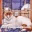 กระดาษสาพิมพ์ลาย สำหรับทำงาน เดคูพาจ Decoupage แนวภาพ แมวตัวขาว หัวกับหางสีน้ำตาล นอนบนพนักโซฟาริมหน้าต่าง thumbnail 1