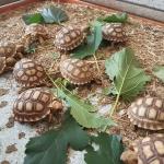 เลี้ยงเต่า (เต่าดาว) แบบเครียดๆ : By Tbank Bank