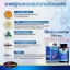 Auswelllife Glucosamine 1500 mg. กลูโคซามีน วิตามินบำรุงกระดูก และข้อ thumbnail 8